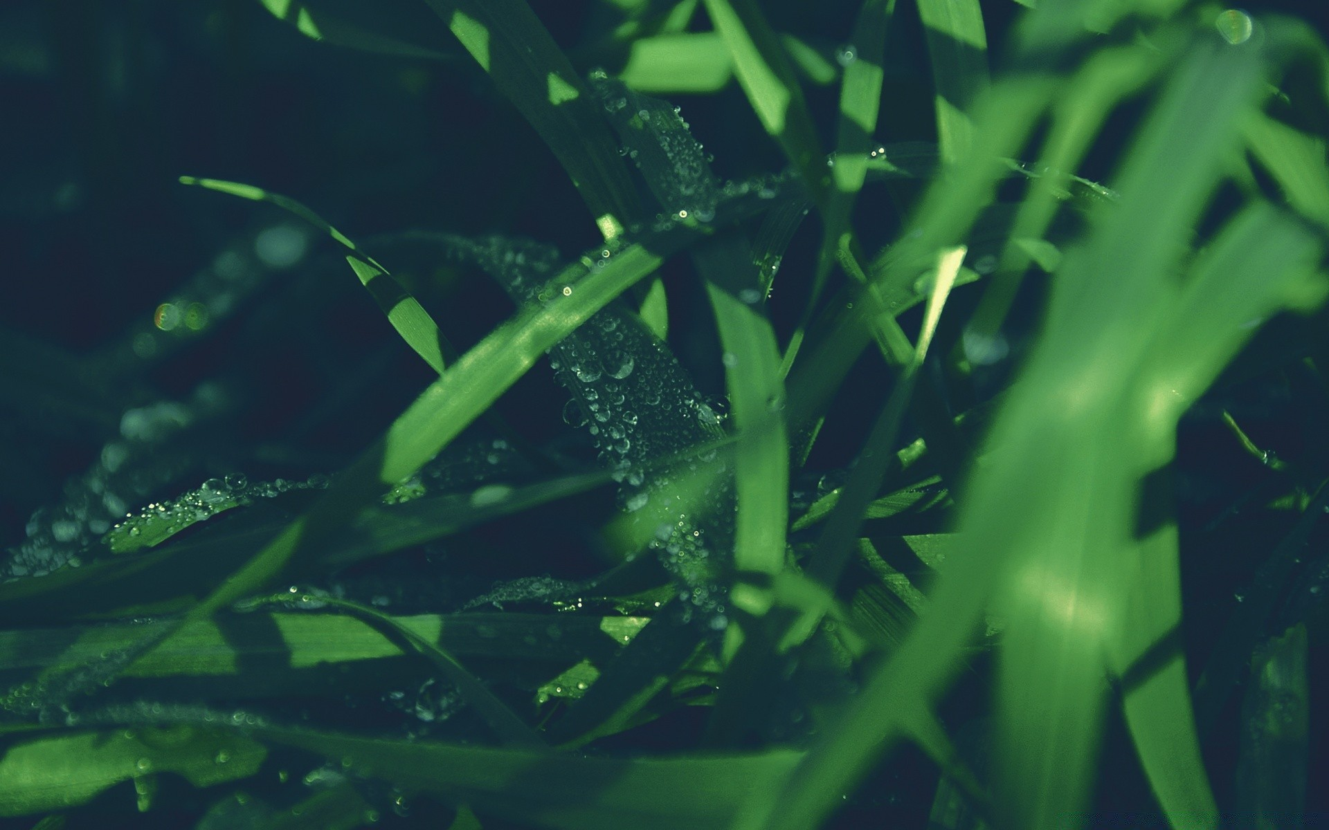 Blades Of Grass Android Wallpapers