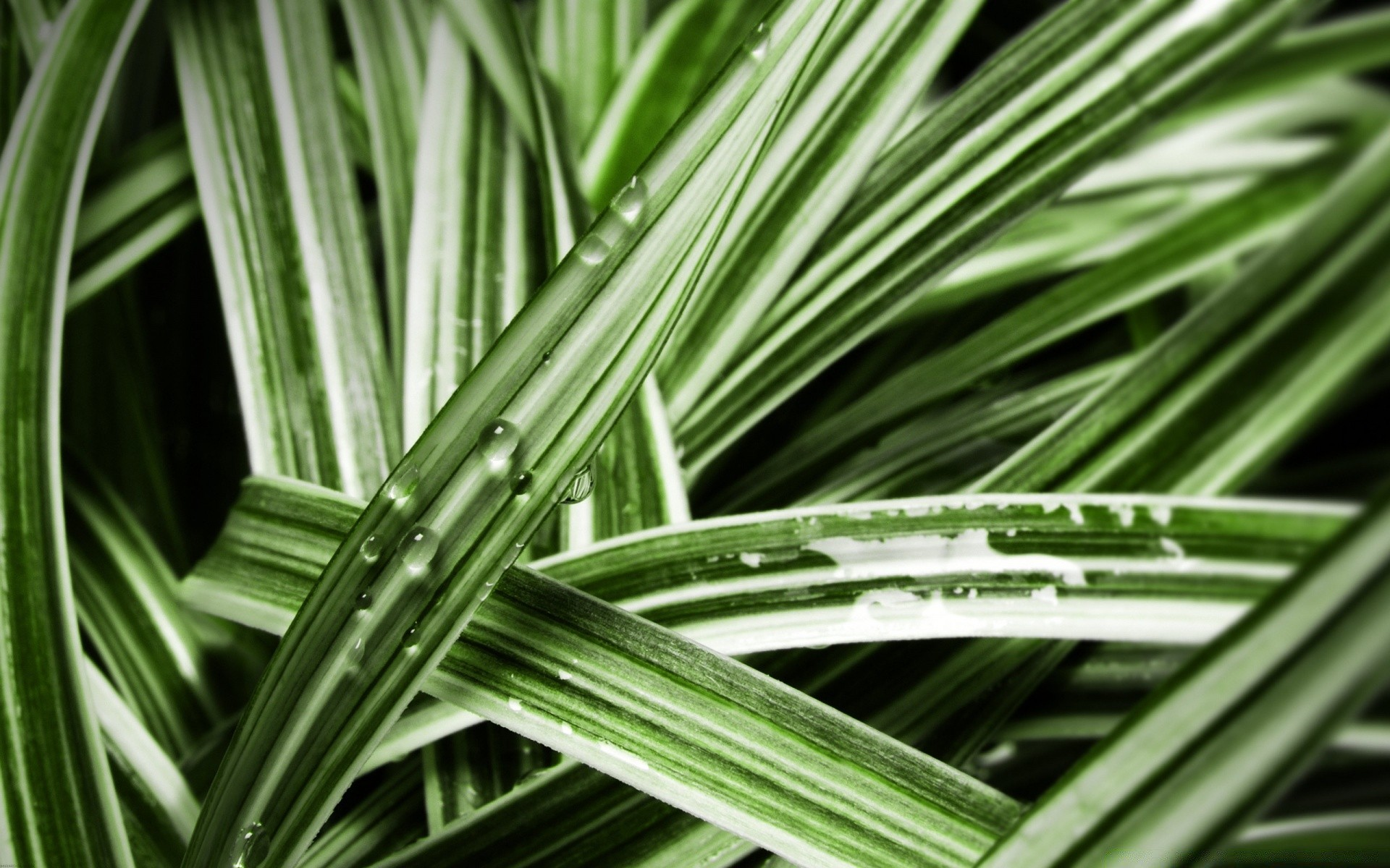 Grass Blades Android Wallpapers