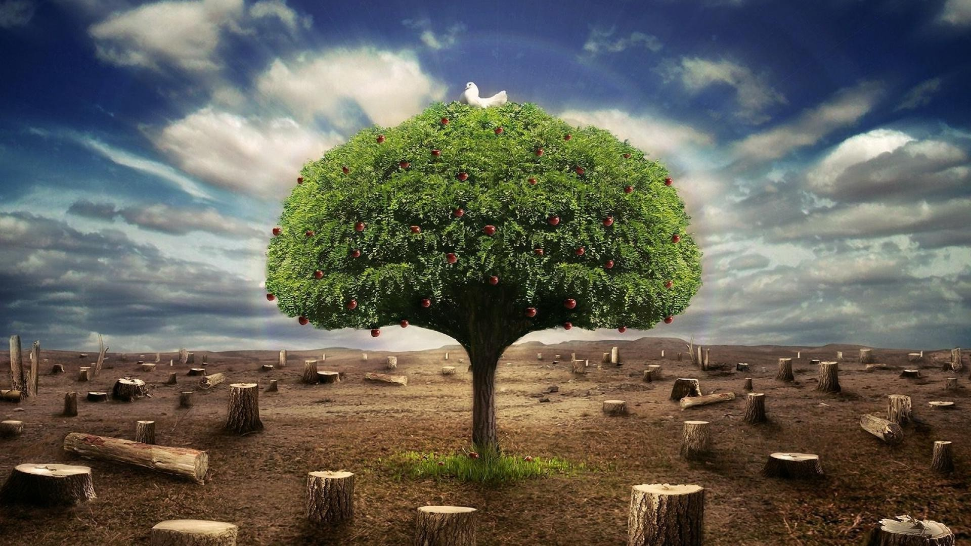 The Only Fruit Tree In The Garden Of Eden Free Wallpapers