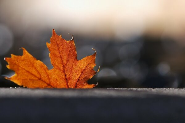 Maple Leaf, Bokeh