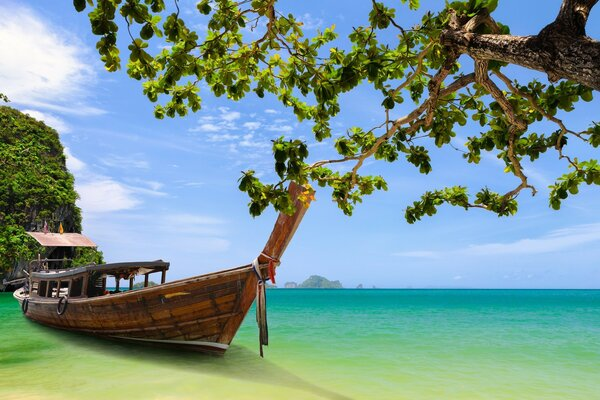 Thailand. The boat moored to the shore near the tree