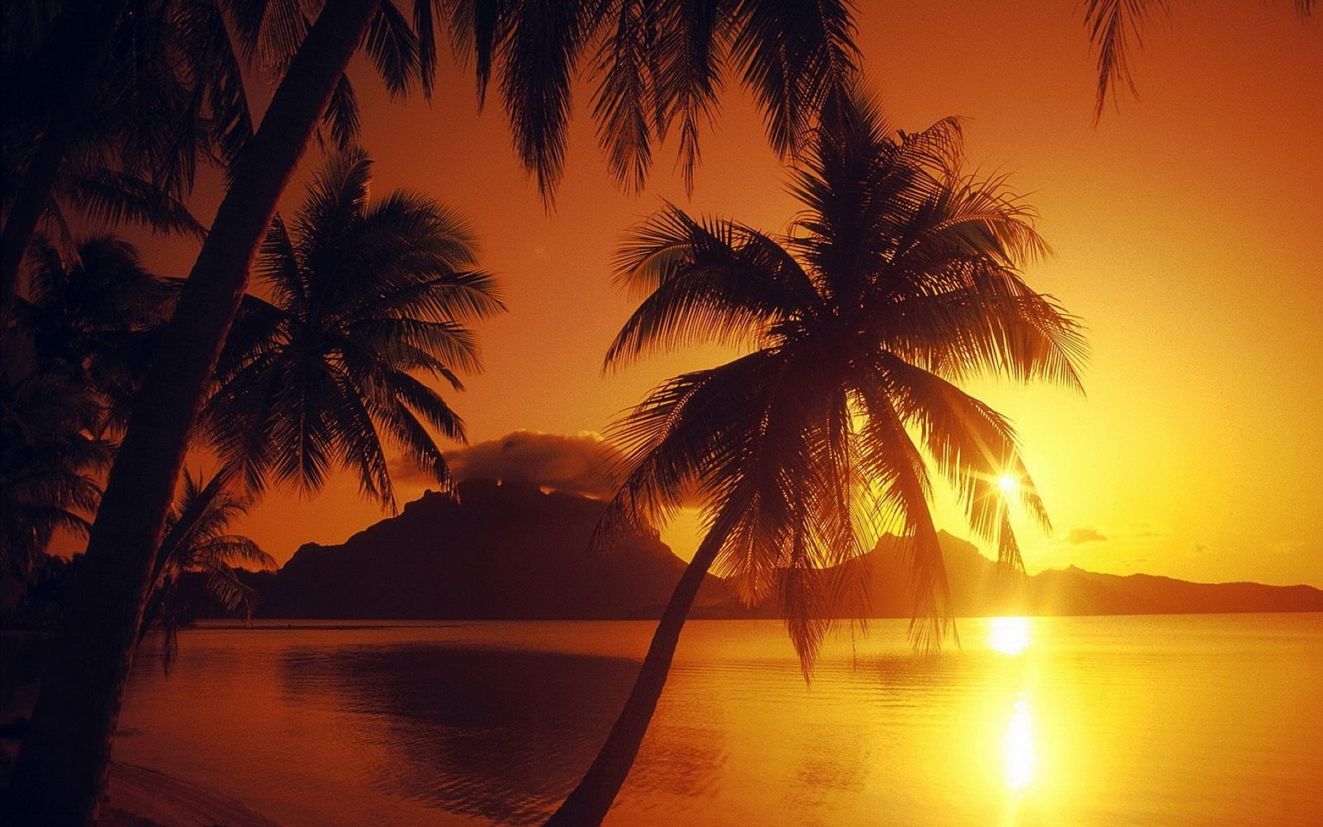 the sunset and sunrise sunset beach sun tropical water dawn dusk exotic sand backlit silhouette evening palm ocean seashore idyllic seascape fair weather summer