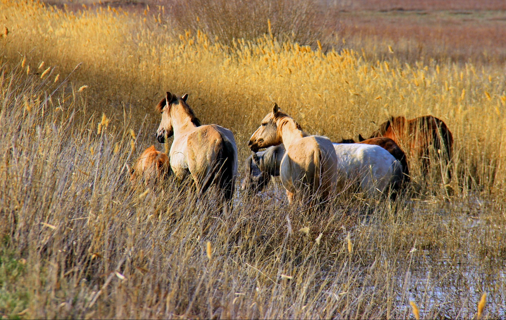 horses mammal cavalry grass pasture grassland outdoors farm field animal wildlife horse hayfield agriculture rural livestock mare mane nature daylight