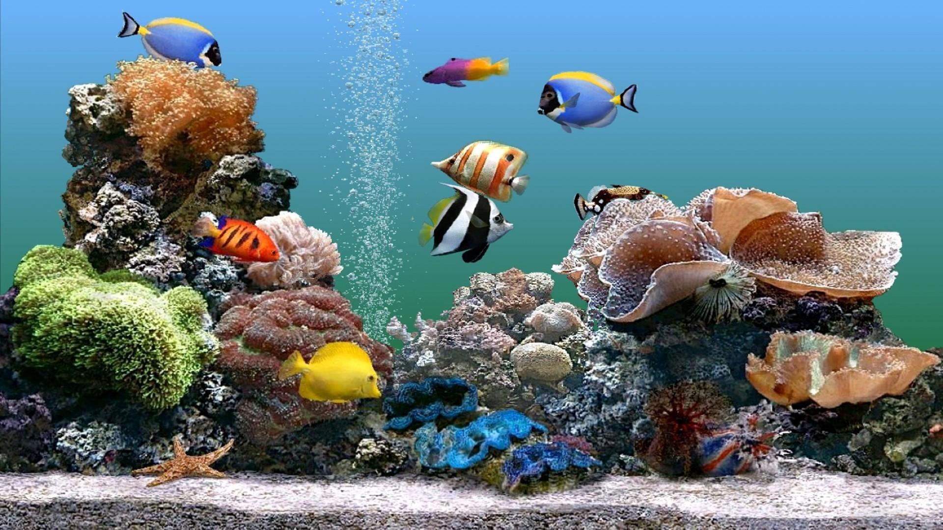 Картинки на рабочий стол аквариум с рыбками  Wallpapers