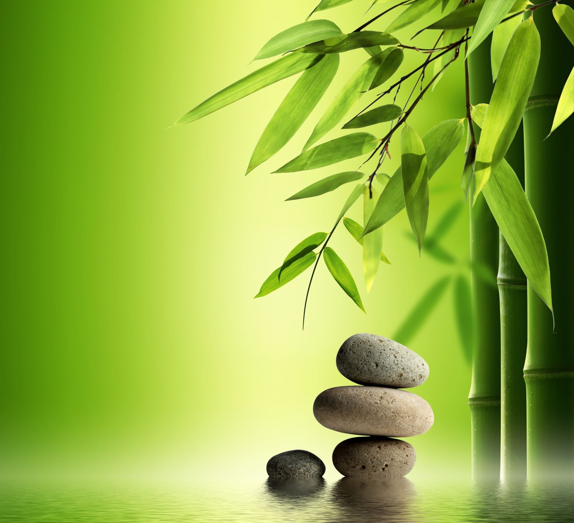 leaves zen balance harmony stability leaf bamboo meditation nature flora alternative therapy treatment peace minimalism simplicity growth cobblestone tree garden desktop