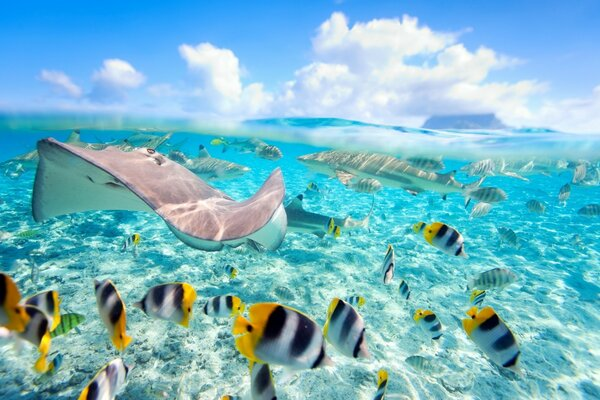 Tropical Underwater World