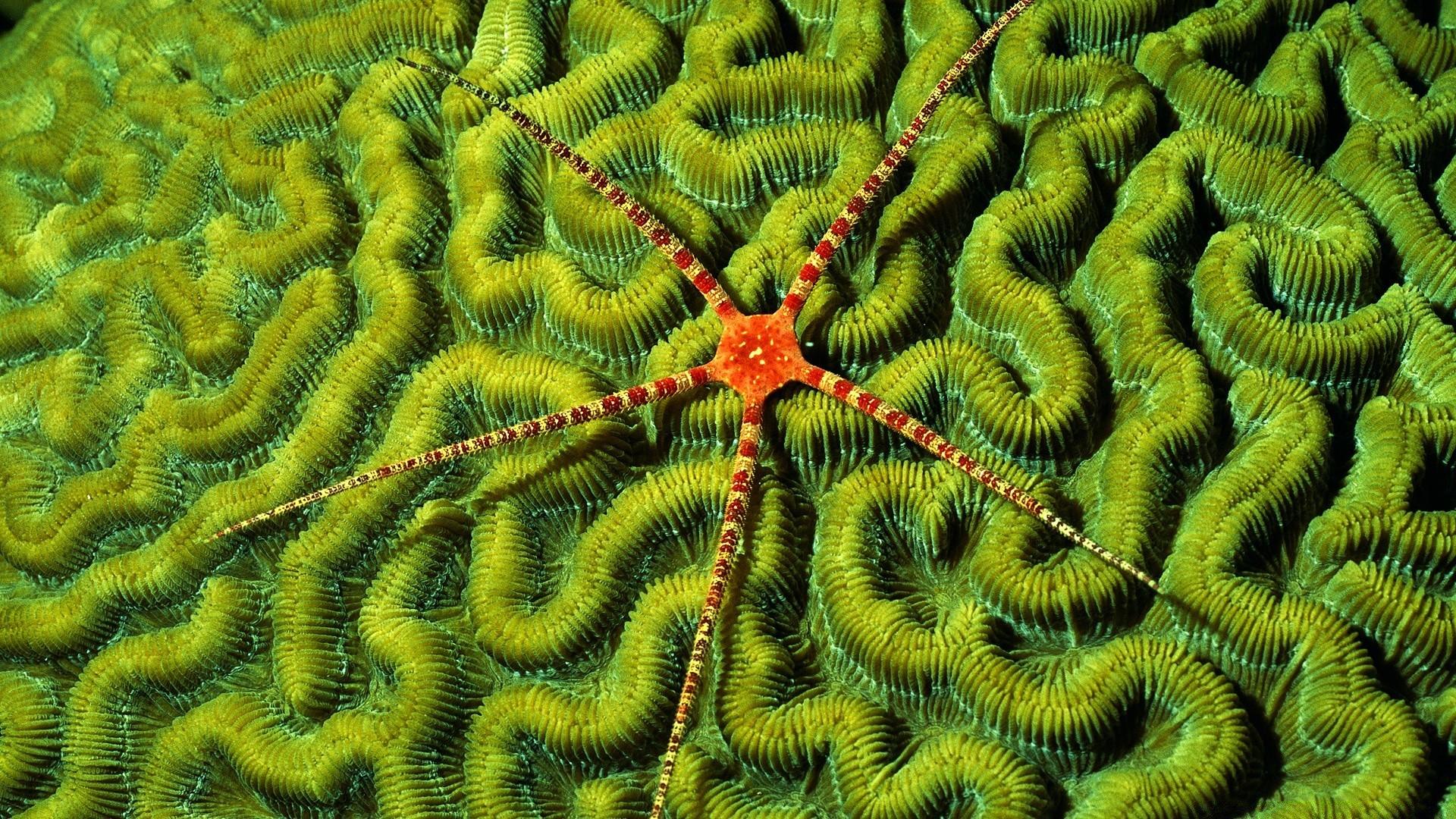 Brittlestar On Brain Coral Phone Wallpapers