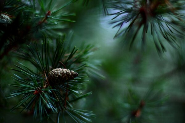 Pine Cones And Twigs