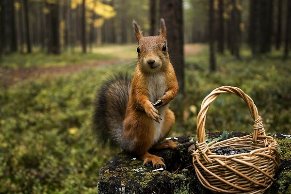 Do You Want Some Acorns