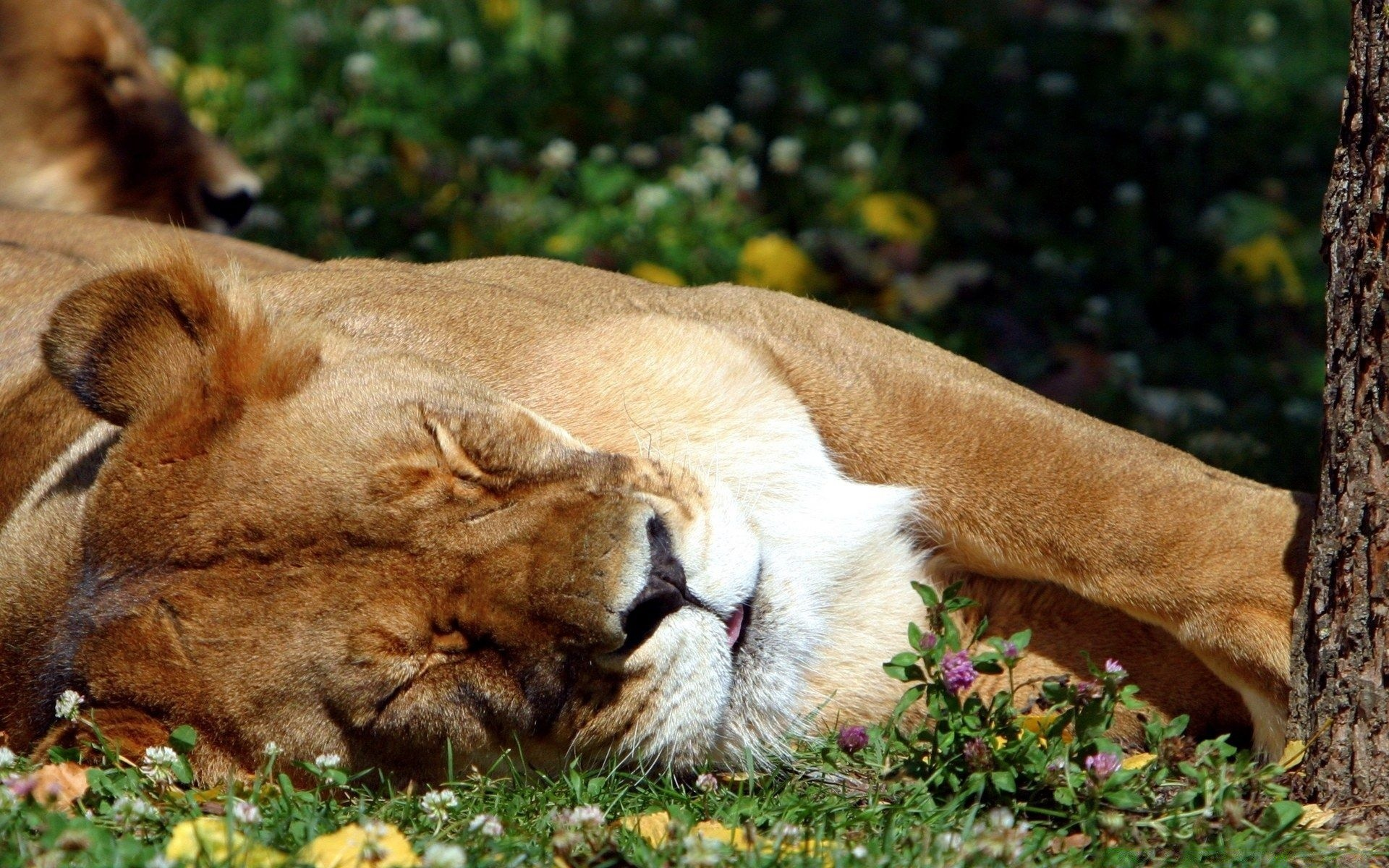 sleepy animals pictures - HD1920×1200
