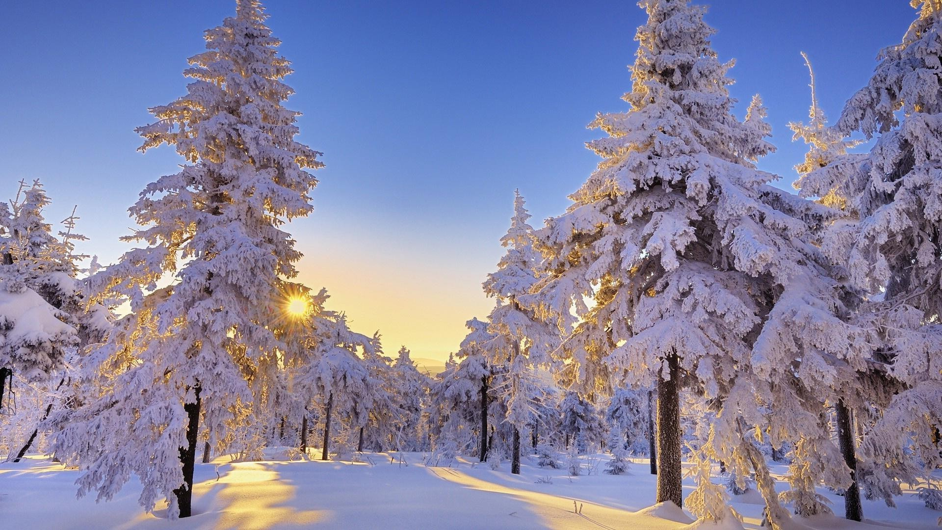 Sunset in winter forest