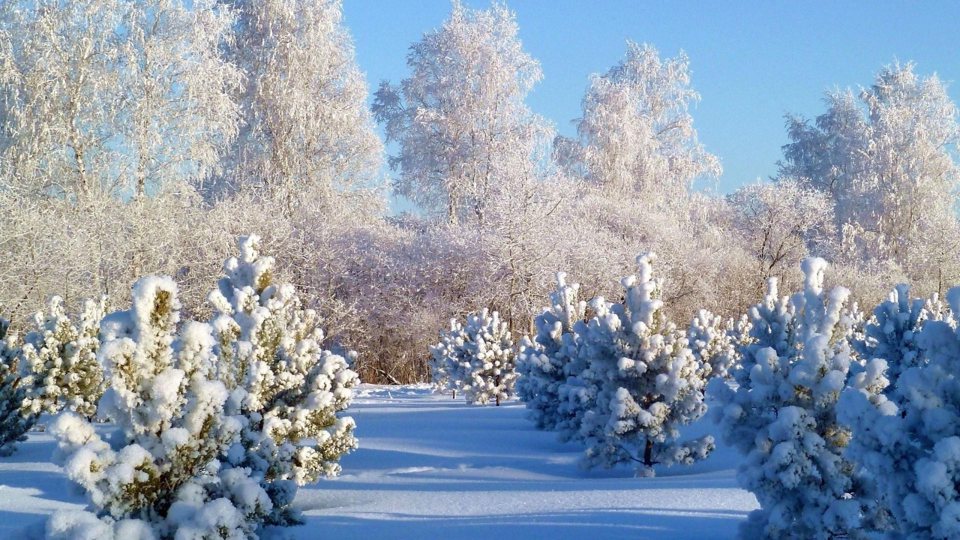 winter snow tree frost season nature branch cold landscape frozen wood fair weather flora outdoors weather ice flower