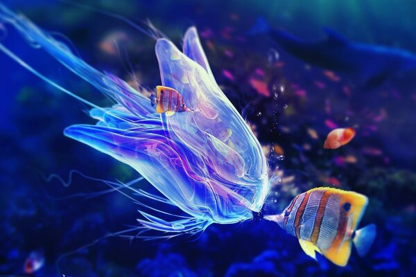 Fish and jellyfish