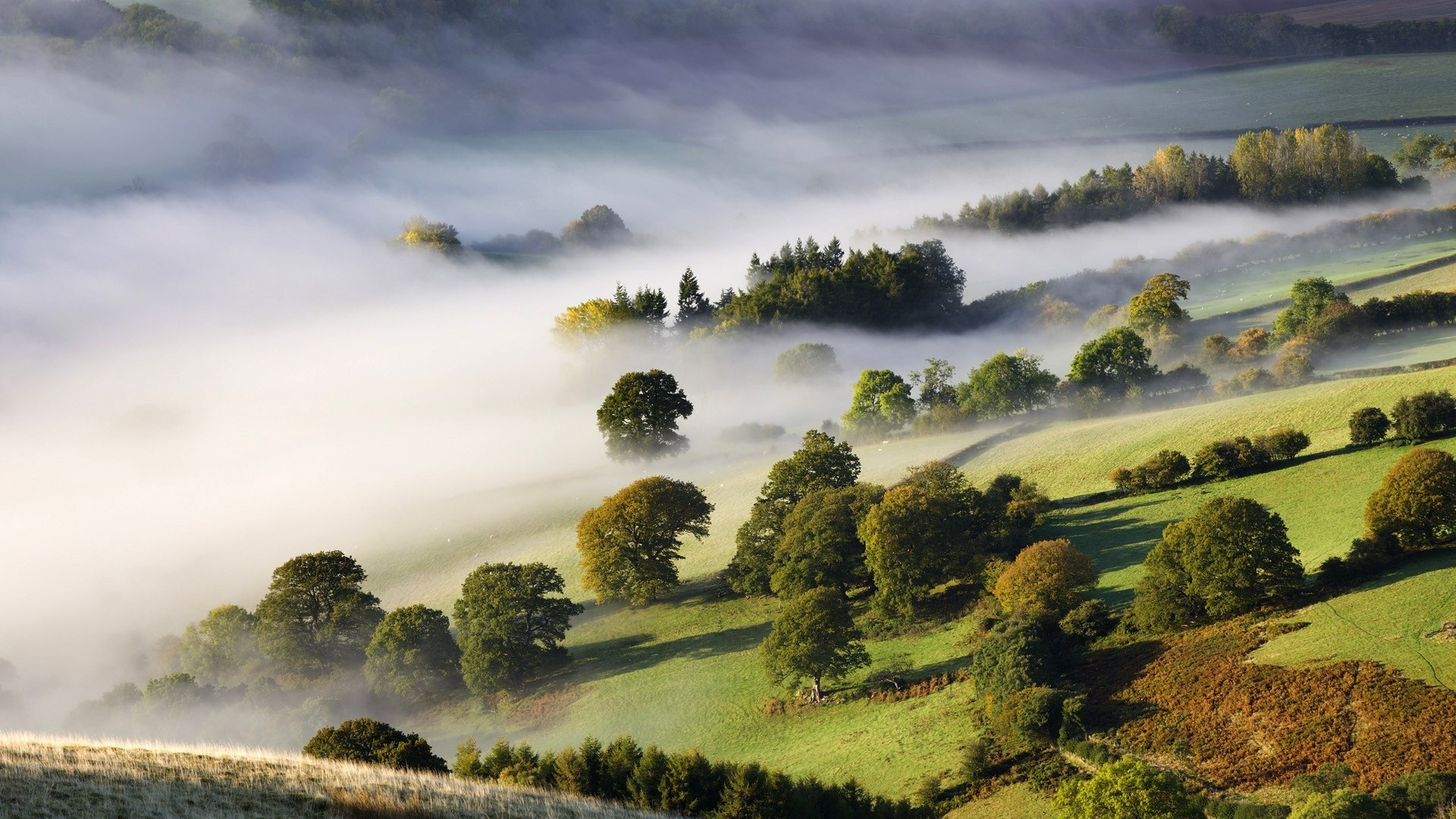 Meadow, trees, greens, fog