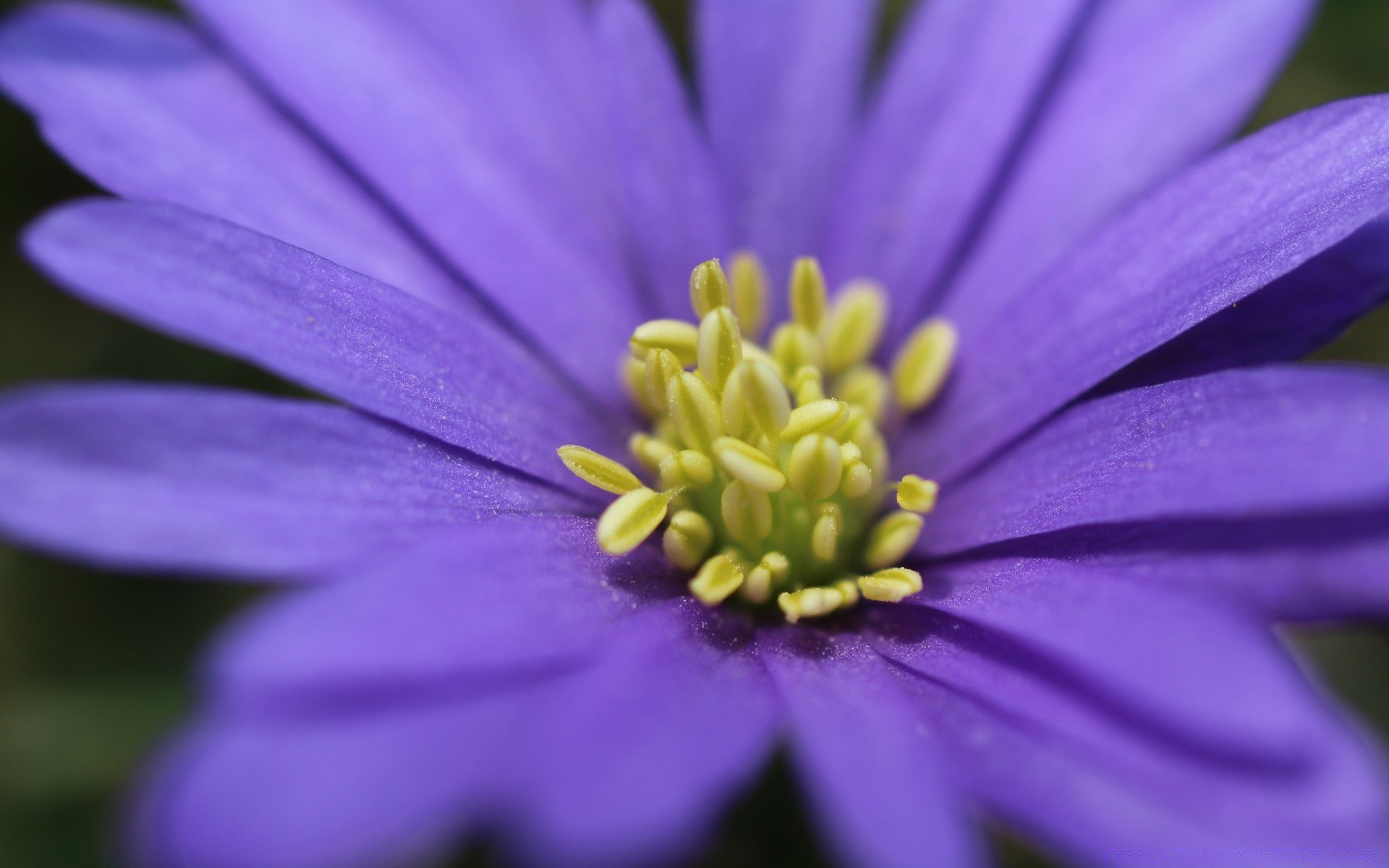 Purple flower with yellow stamens iphone wallpapers for free mightylinksfo