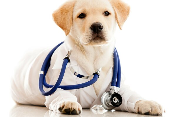 Puppy with stethoscope