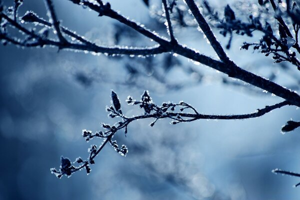 Frost Branch