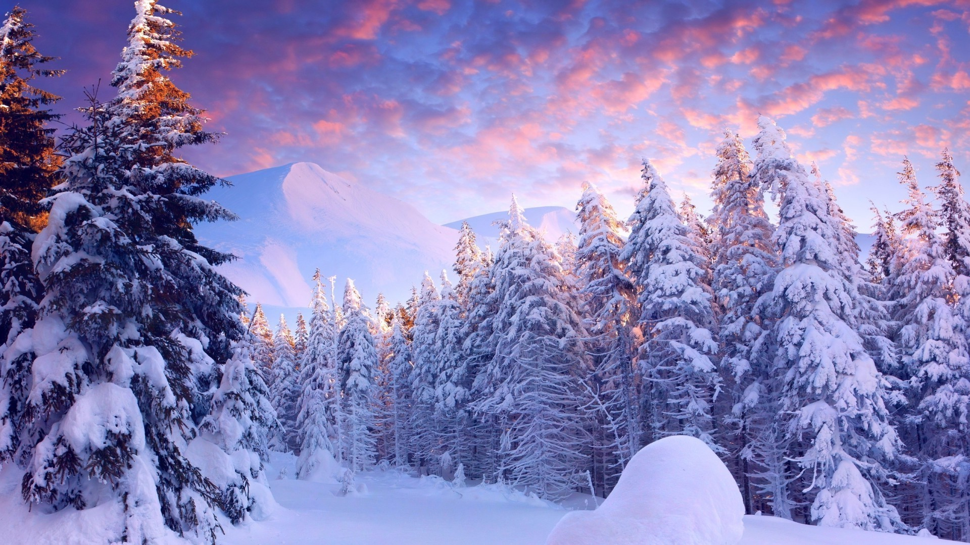 Winter Sunset Over Snowy Forest Desktop Wallpapers For Free