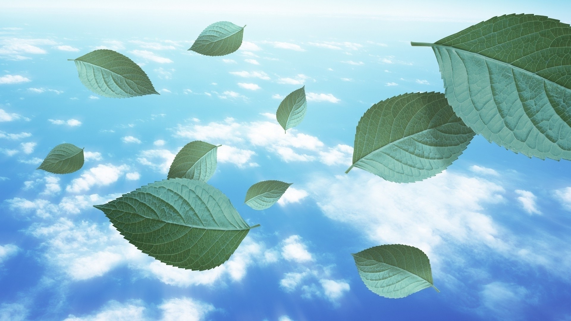 landscapes leaf nature tree flora sky growth outdoors summer