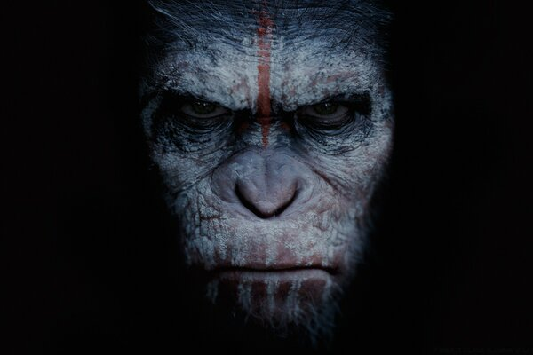 Dawn of the Planet of the Apes 2014 Movie