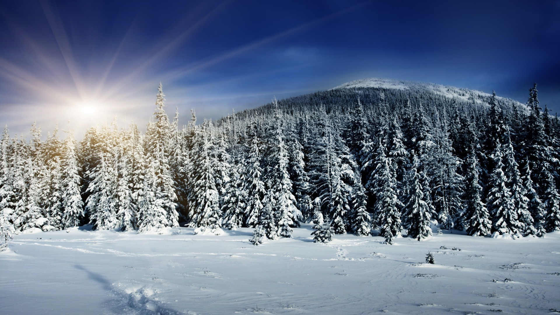 The sun illuminates the tops of snow-covered fir trees