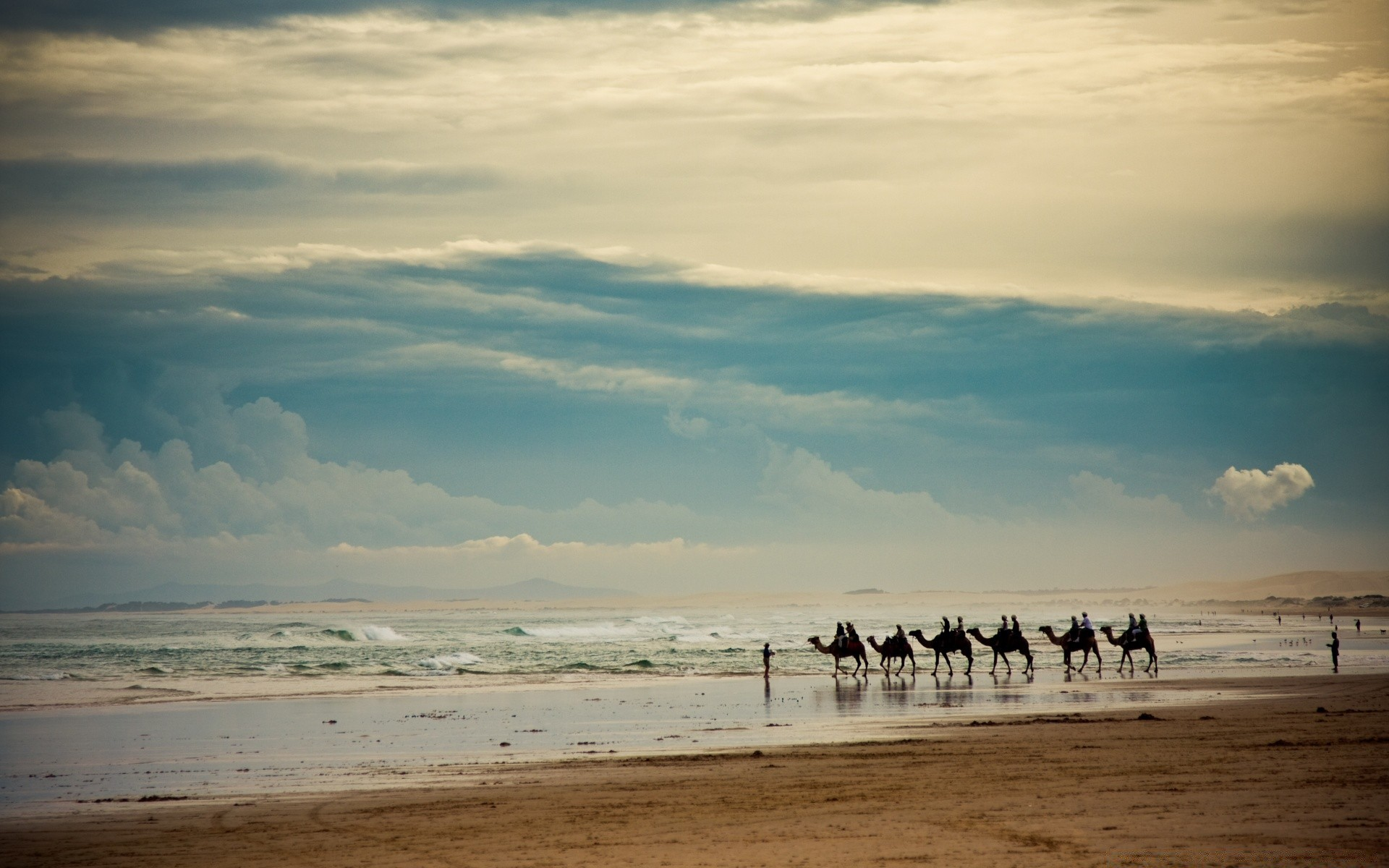 Camels On The Beach Phone Wallpapers