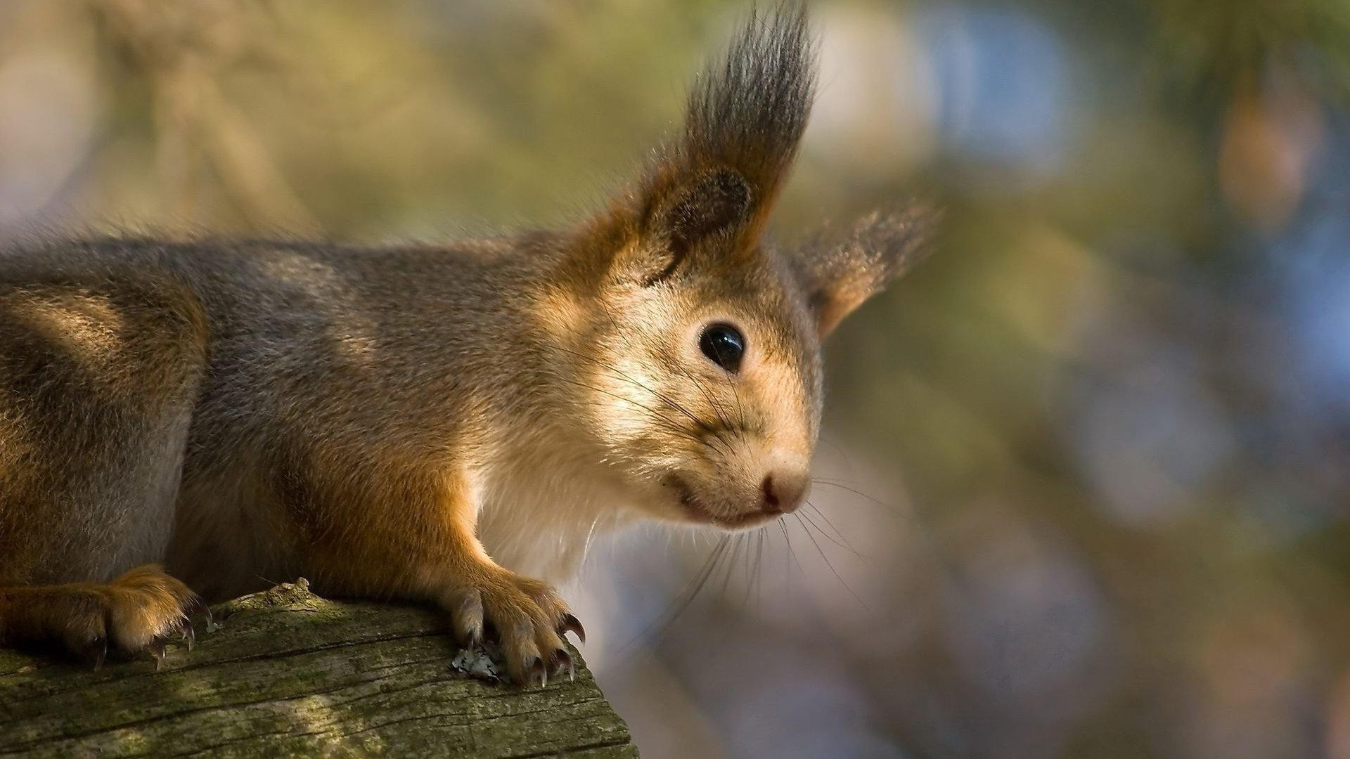 proteins mammal squirrel wildlife rodent cute nature outdoors fur animal eye looking little portrait