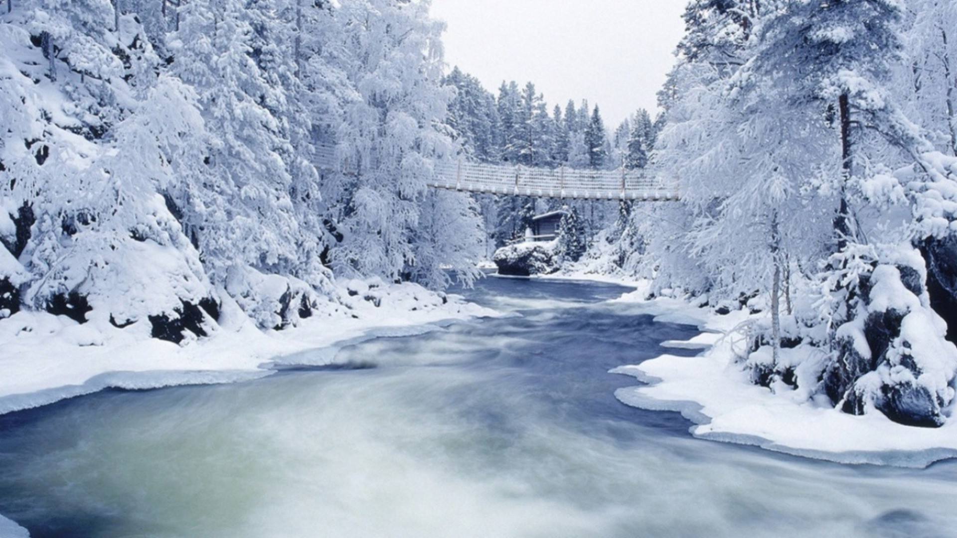 Snow, trees, river, bridge