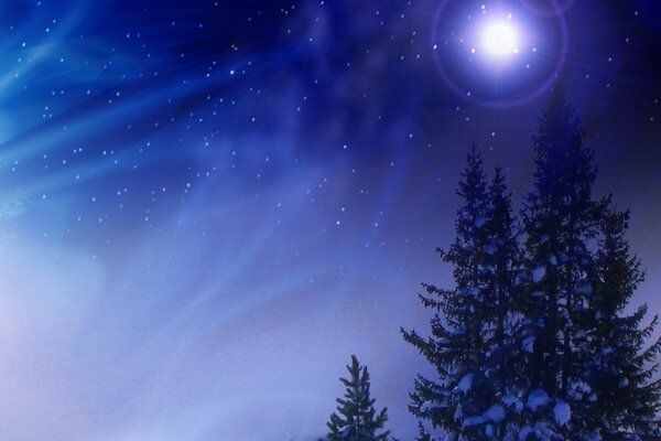 Night, Shine, spruce, star