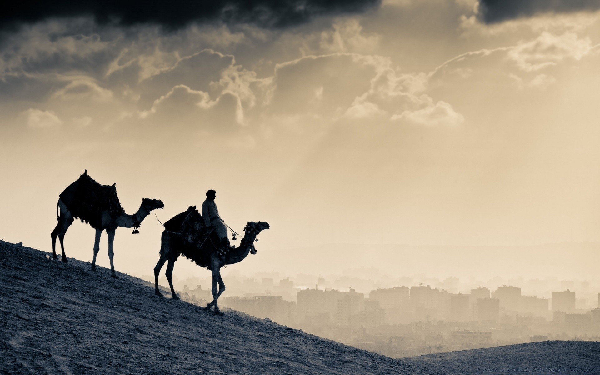 desert mammal camel travel sitting landscape cavalry one sky outdoors backlit mountain transportation system sunset dawn