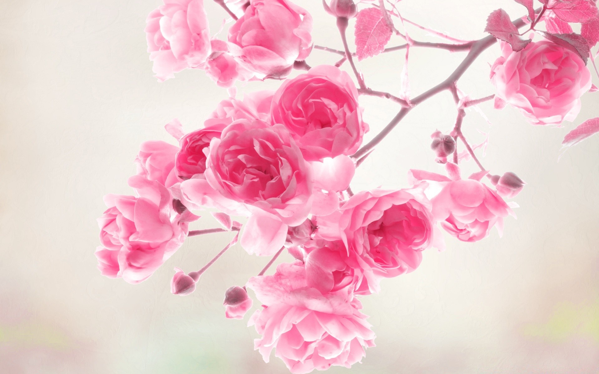 цветок розовый без смс