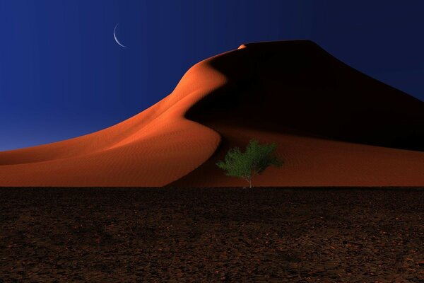 Night In The Desert