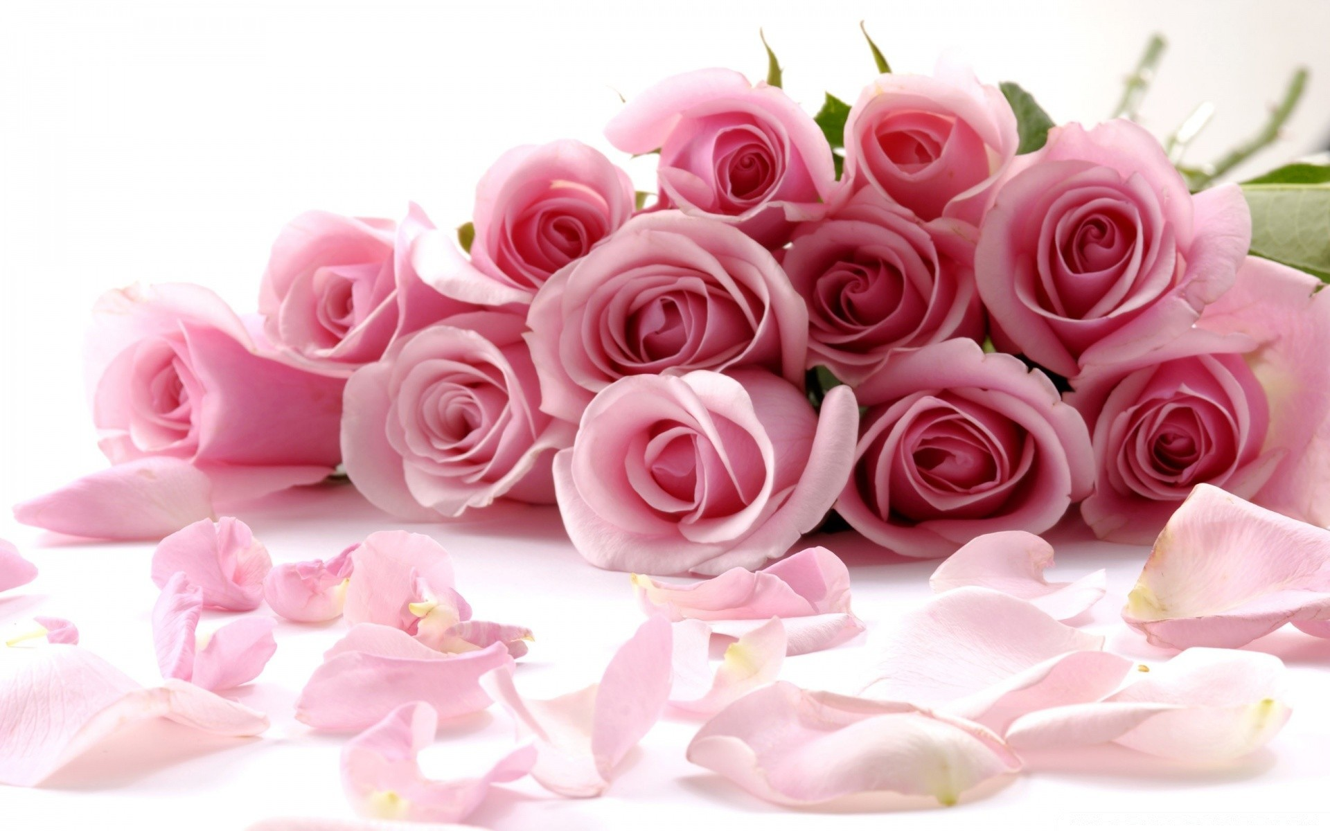 Pink roses bouquet iphone wallpapers for free izmirmasajfo