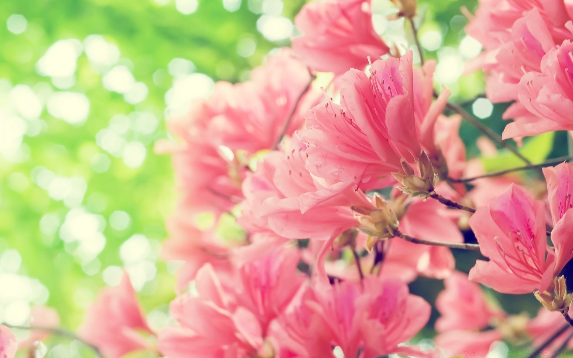 Beautiful Spring Flowers Iphone Wallpapers For Free