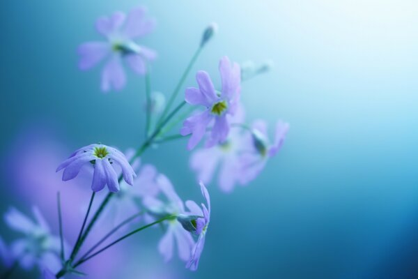 Delicate Violet Flowers