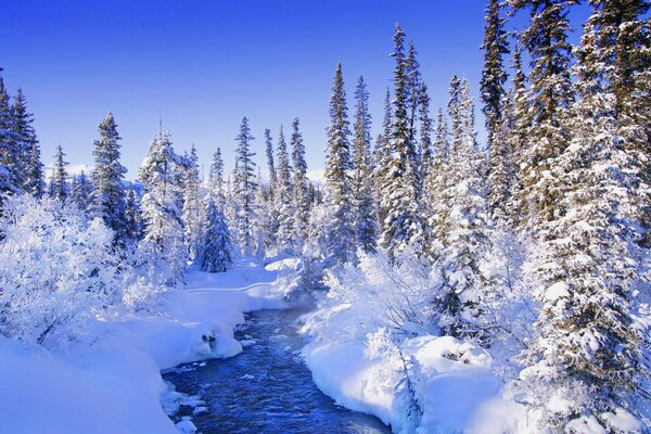 Winter forest, Creek, snow
