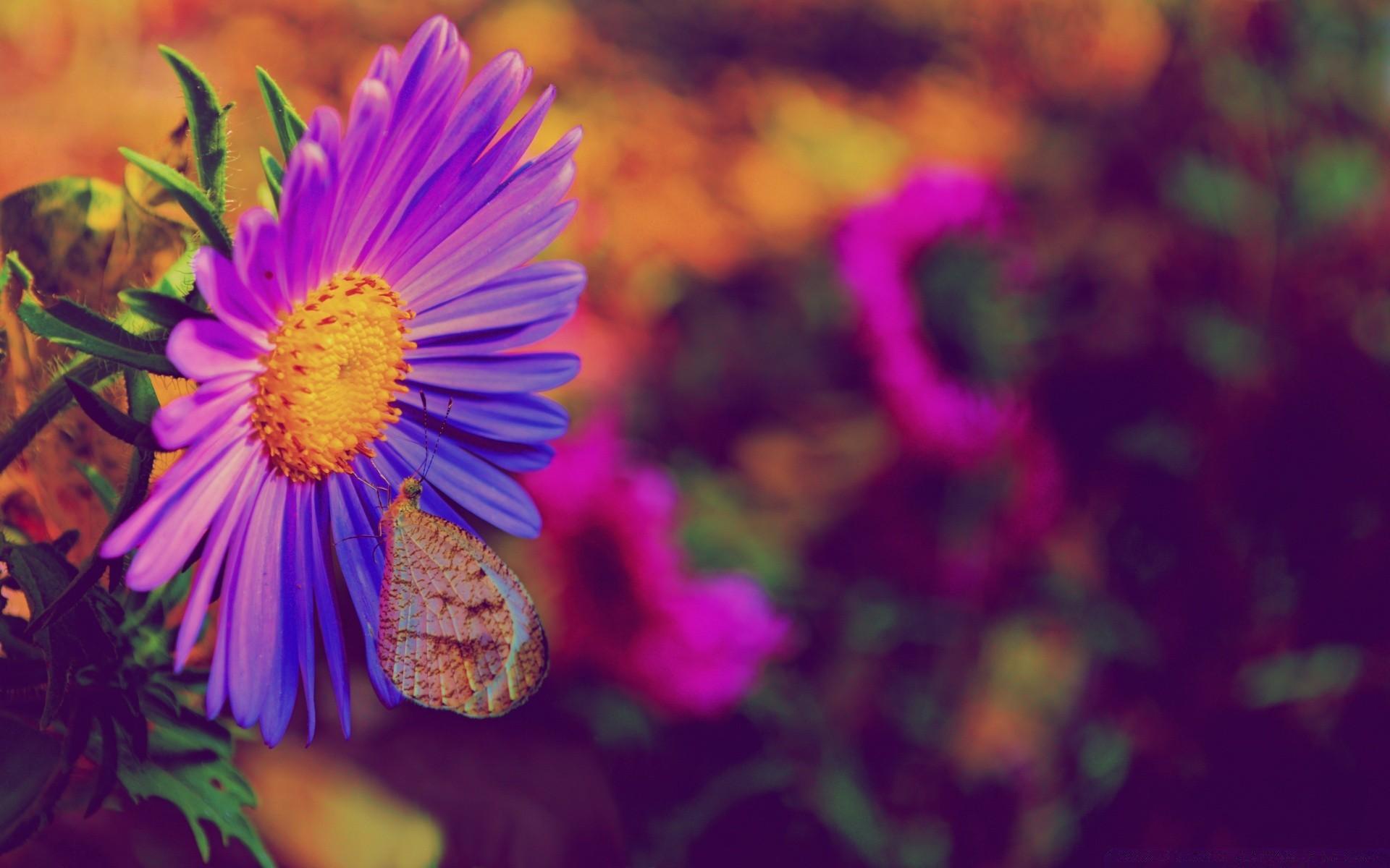 Purple Flower Desktop Wallpapers For Free