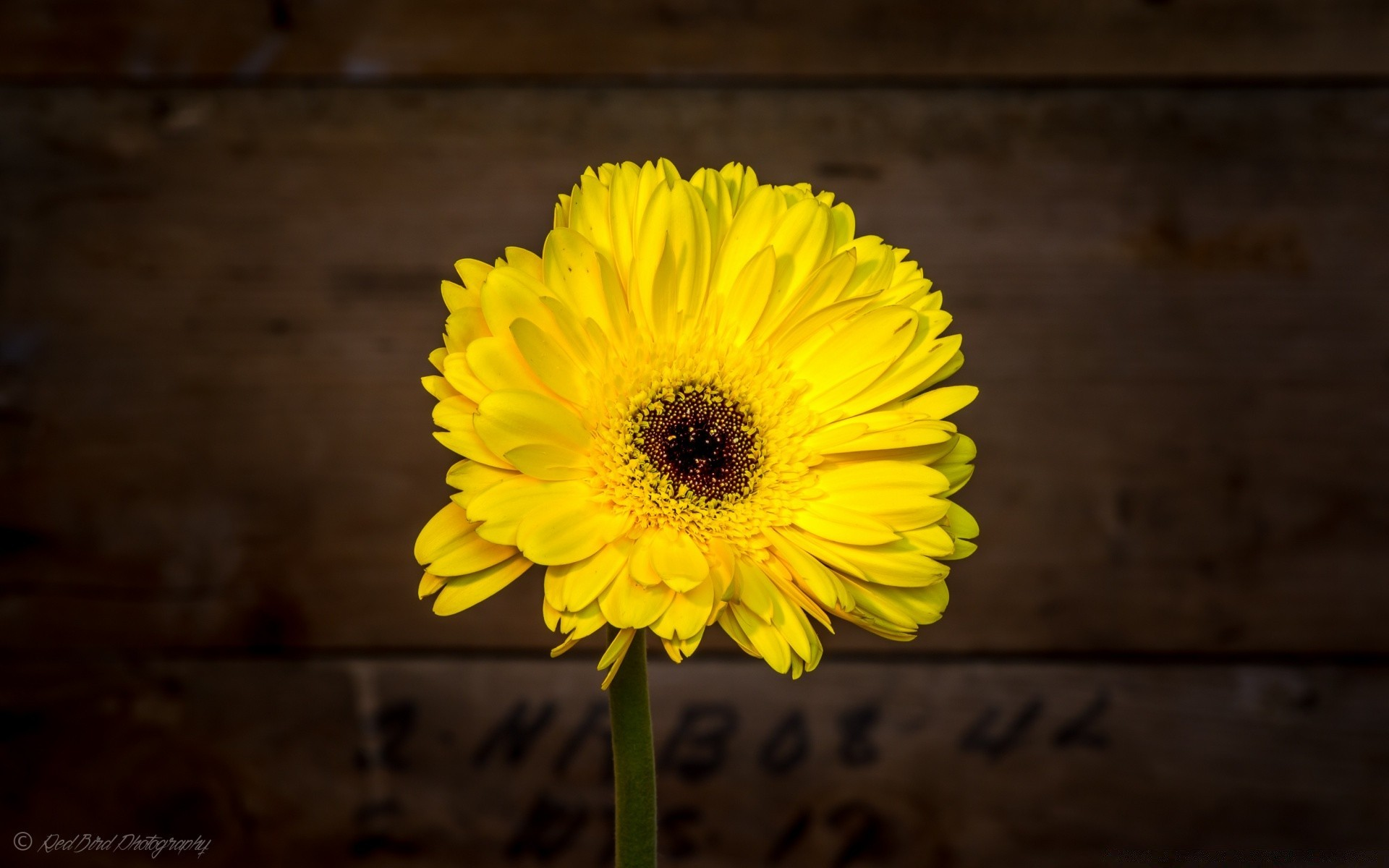 Yellow Flower Desktop Wallpapers For Free
