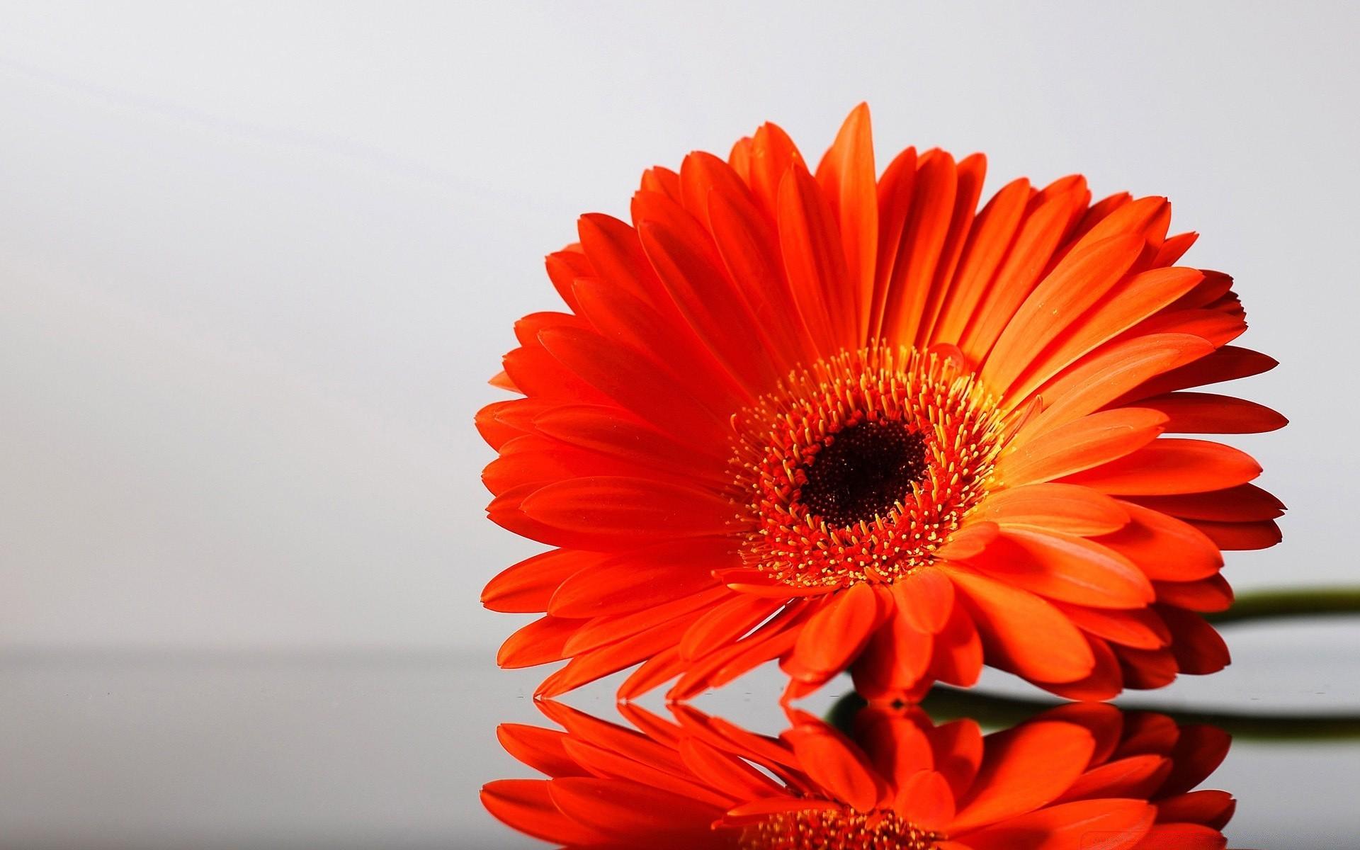 Flower цветок