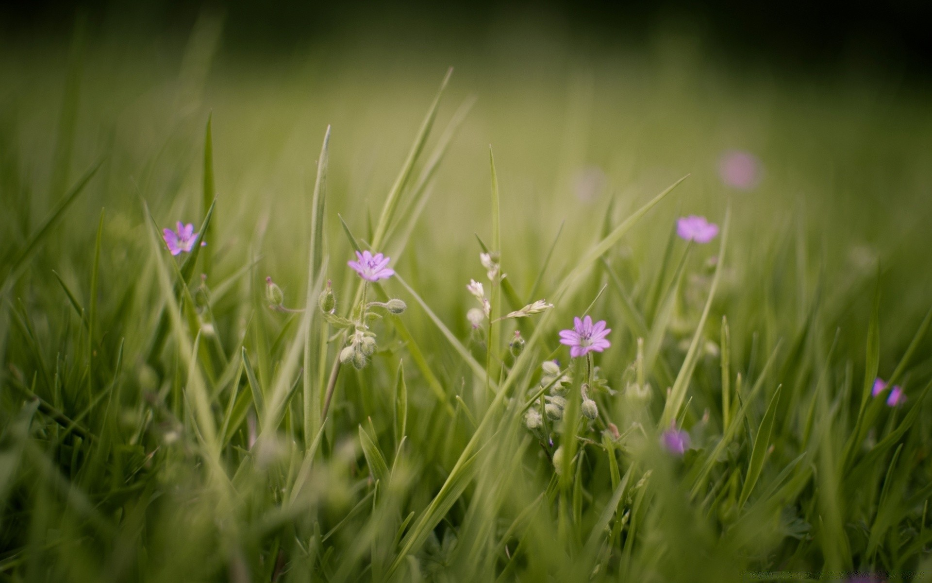 flowers grass nature field flower hayfield summer sun rural garden fair weather flora growth environment outdoors lawn season dof leaf
