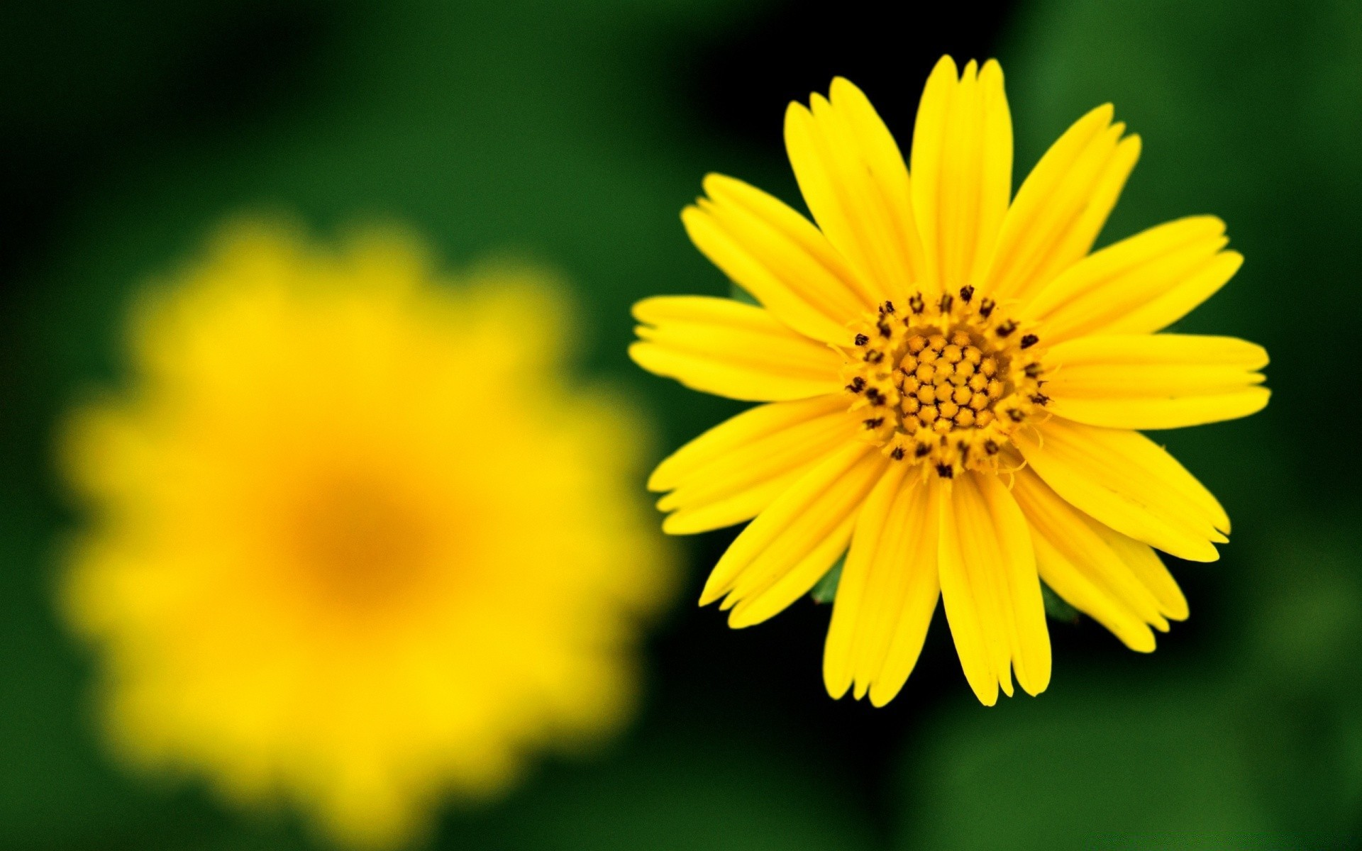 Beautiful Yellow Flower Android Wallpapers For Free