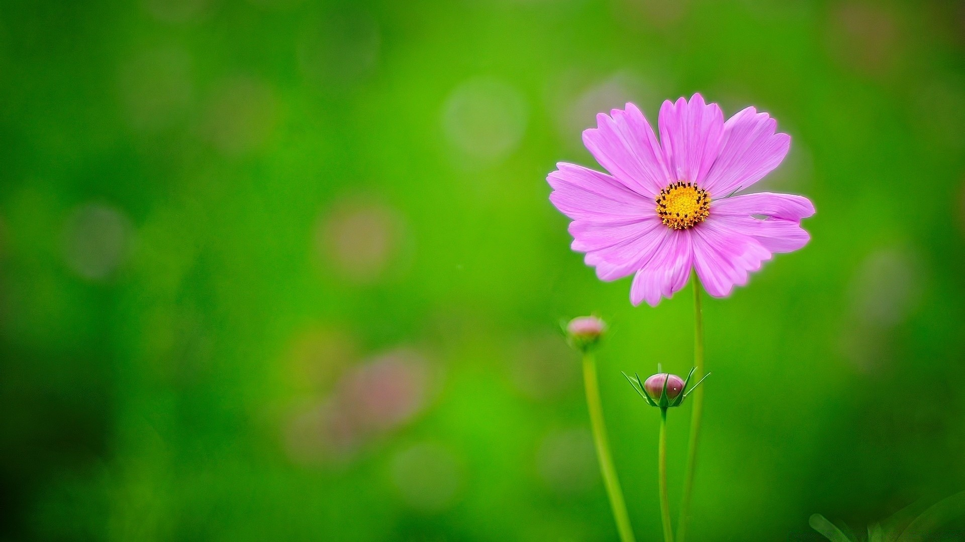 Pink flower green background android wallpapers for free mightylinksfo