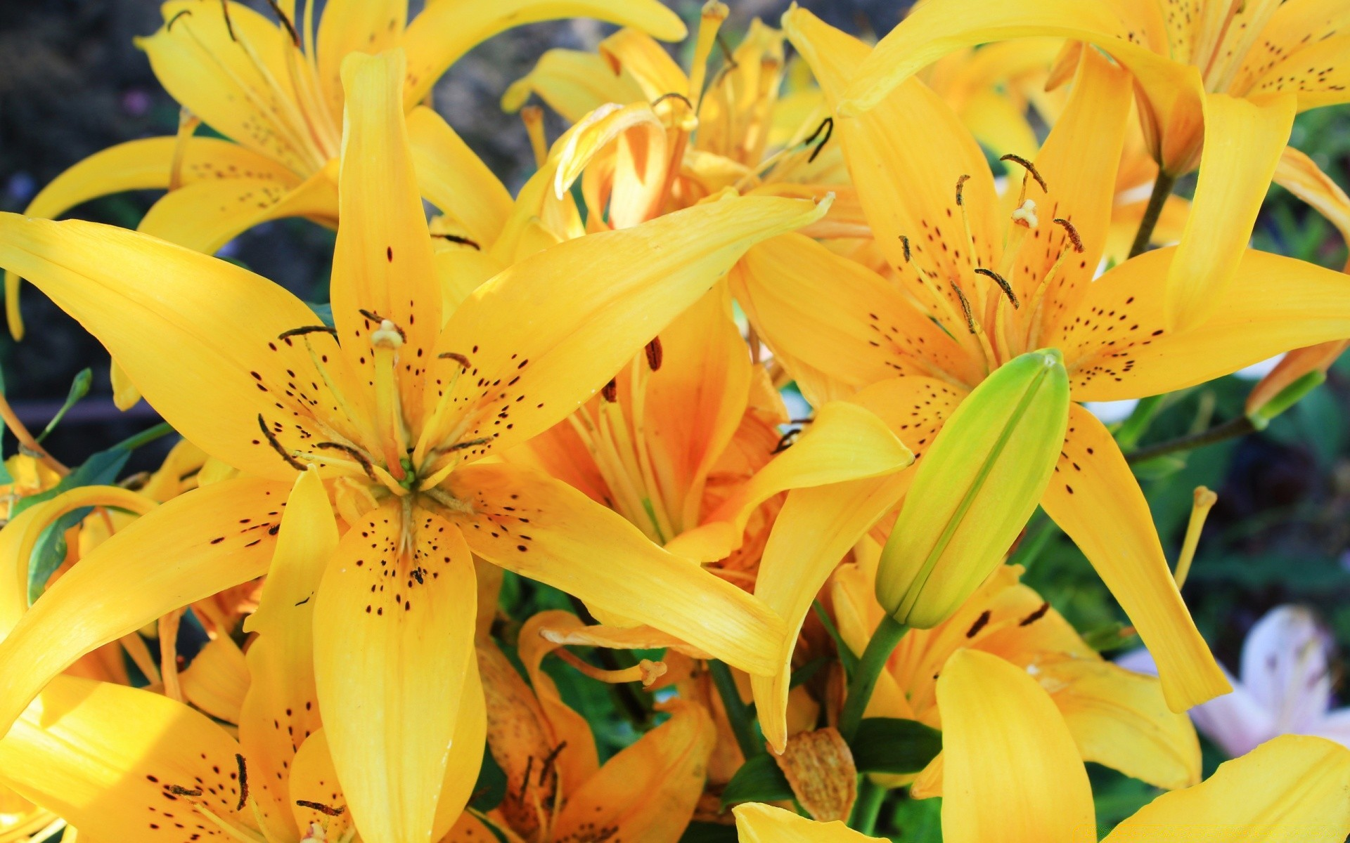 flowers nature flower summer lily flora leaf bright floral beautiful color petal close-up elegant outdoors