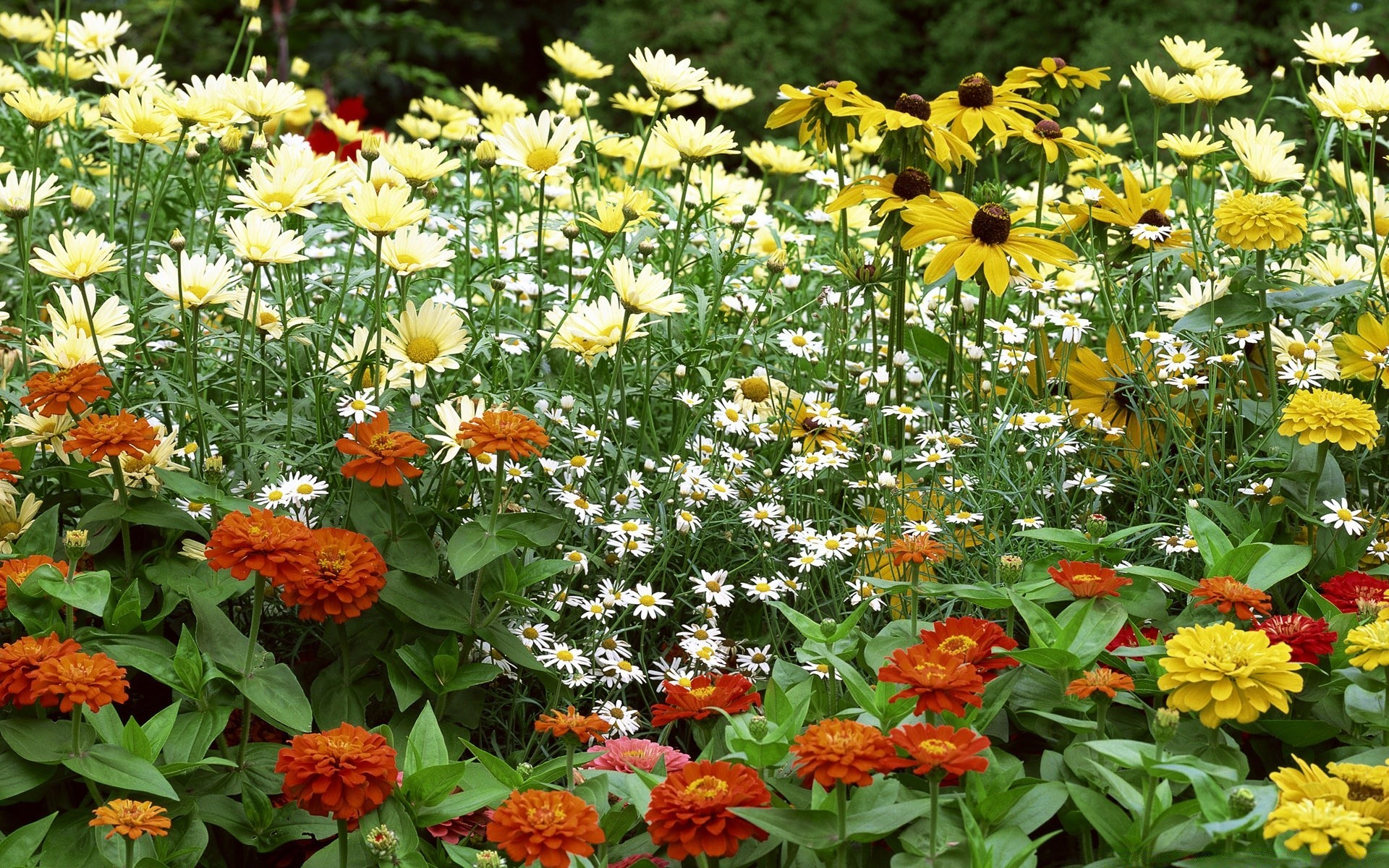 flowers flower flora nature garden floral summer leaf blooming petal season color bouquet bright field hayfield marigold botanical growth vibrant