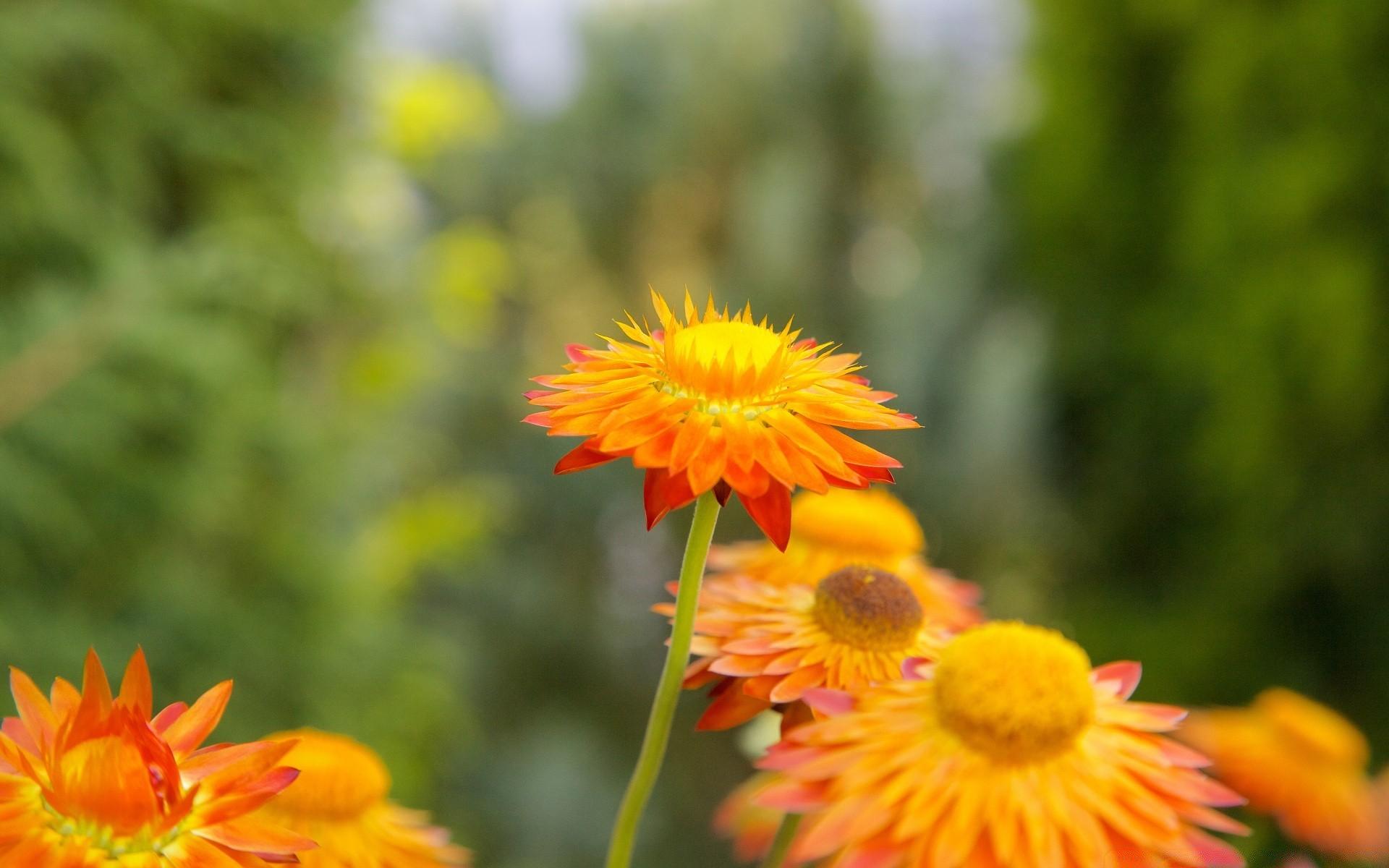 foto de Flower Power - Phone wallpapers
