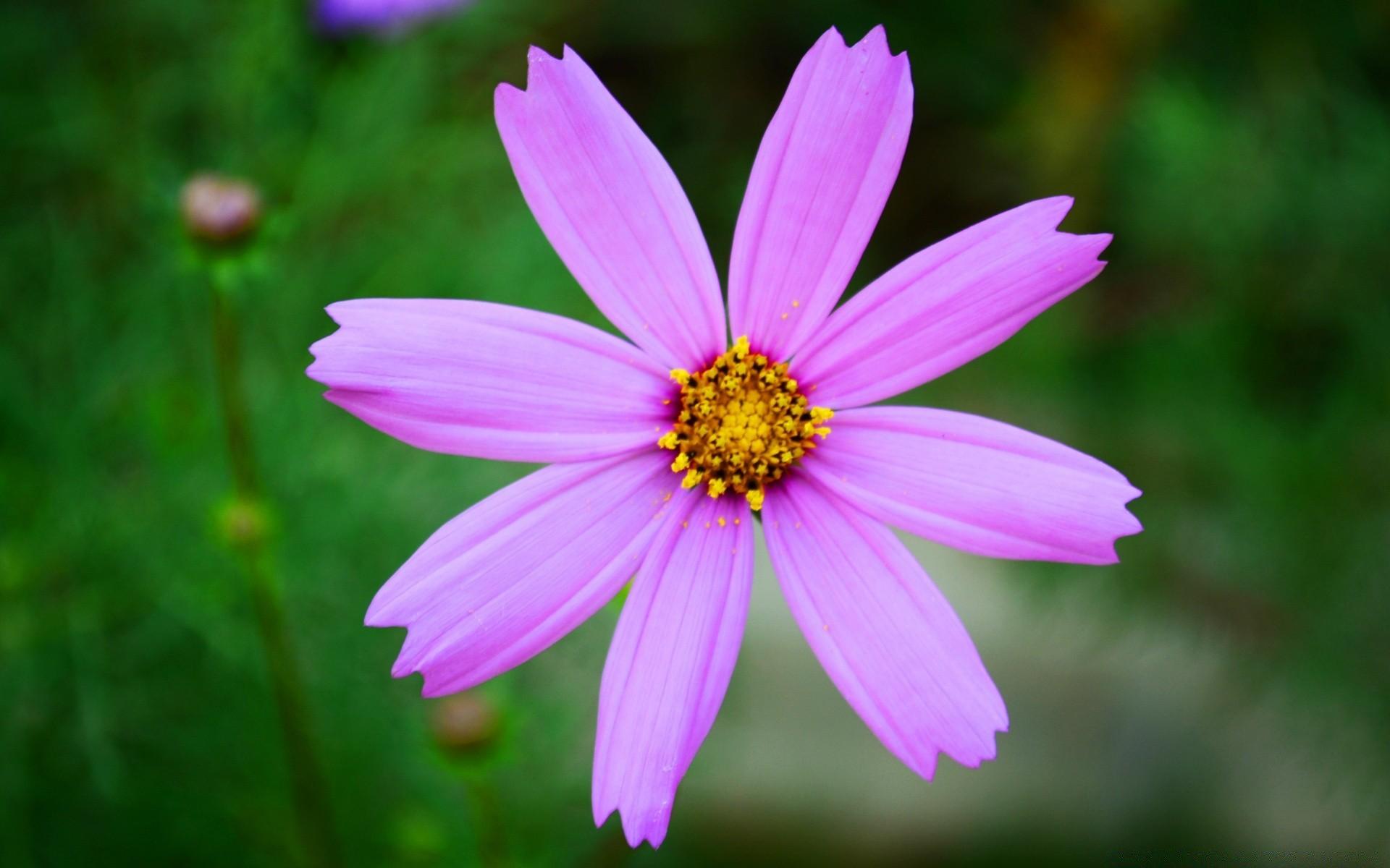 Pink Flower Desktop Wallpapers For Free