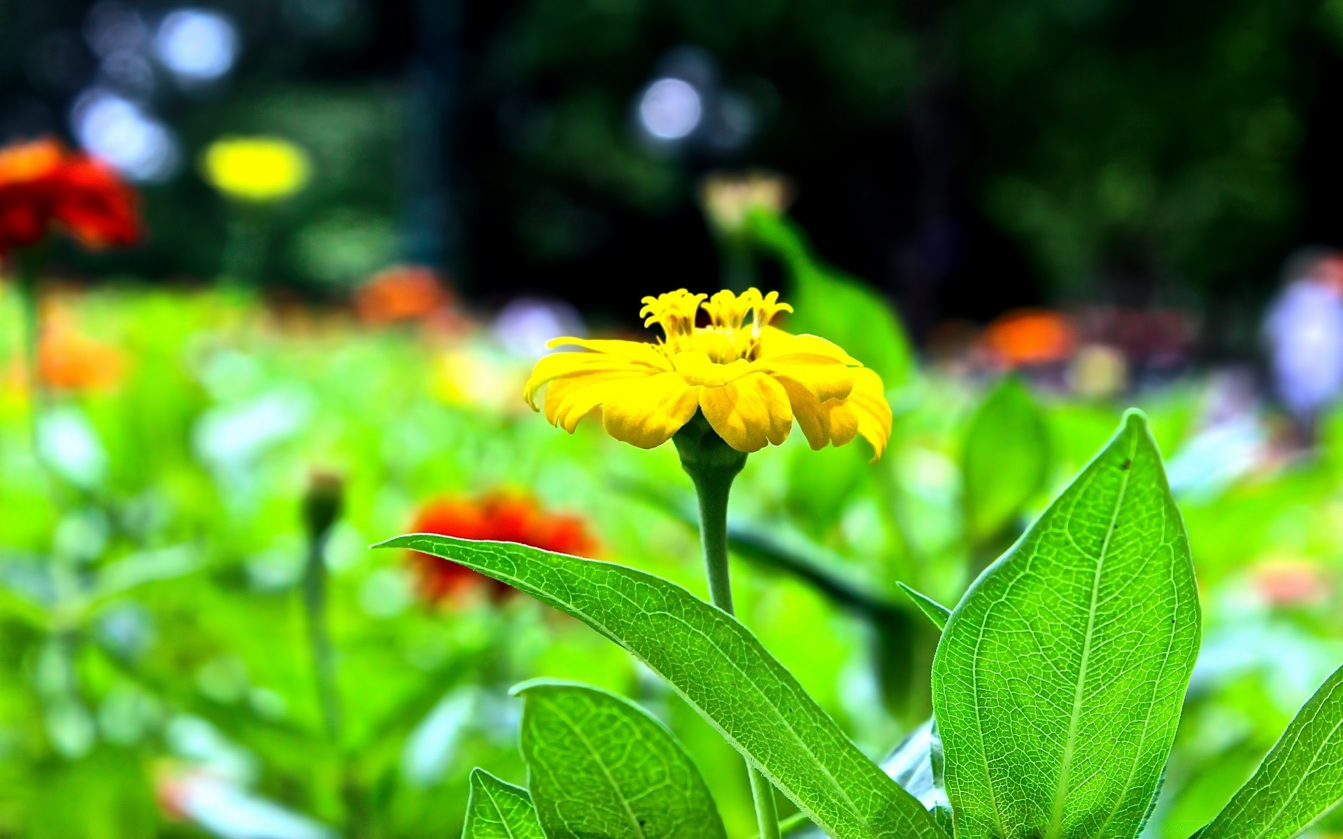 flowers nature leaf summer flora garden flower growth outdoors environment grass fair weather bright color close-up field