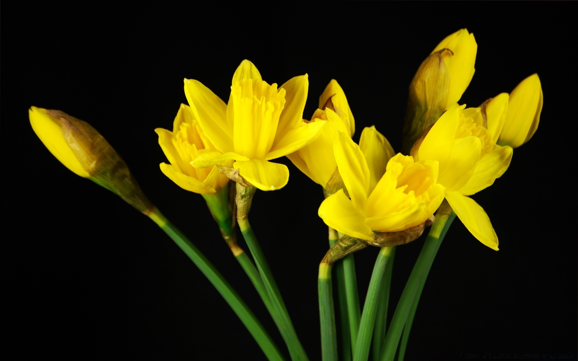 flowers nature flower flora easter daffodil floral narcissus leaf bright growth color petal blooming season summer husk close-up bulb