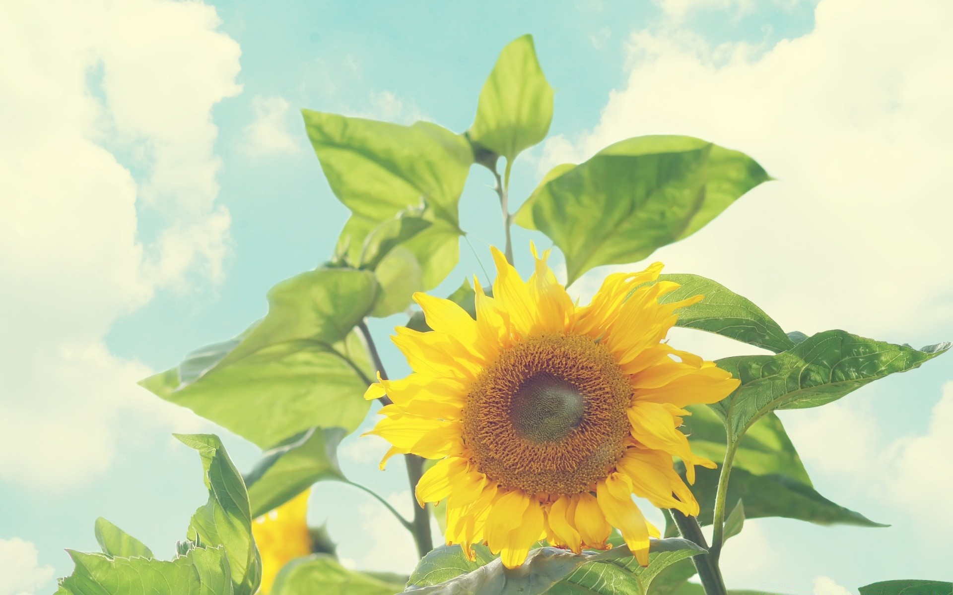 flowers nature flora leaf summer growth flower bright fair weather sun outdoors color sunflower