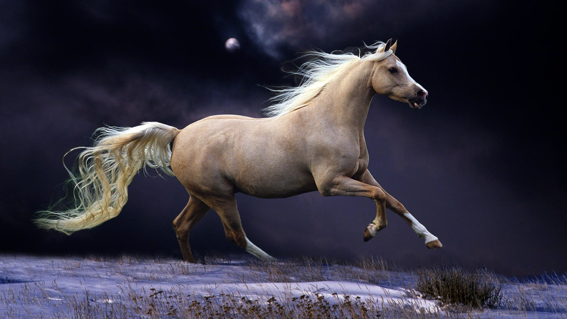 horses cavalry mare horse mammal stallion equine mane animal pony equestrian mustang wildlife action sitting fast one side view nature